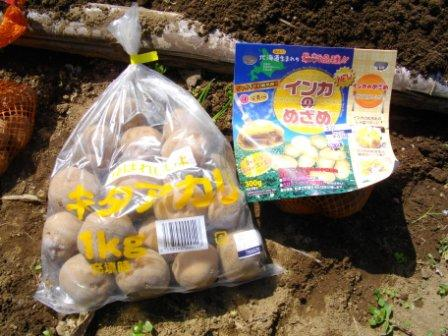Potato0320a